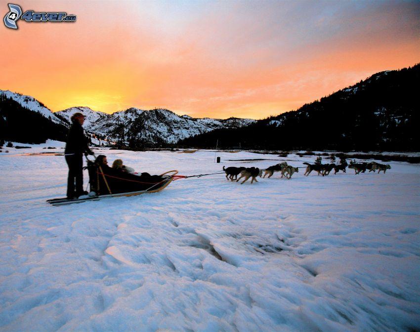 Hundeschlitten, orange Himmel, Schnee