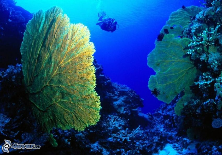 Korallen, Taucher