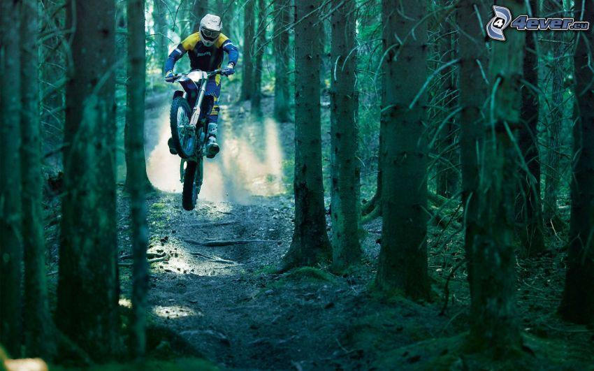 motocross, Wald