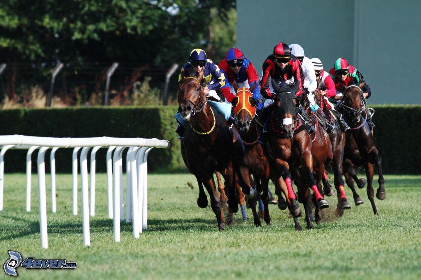 Pferderennen, Rennen, Pferde