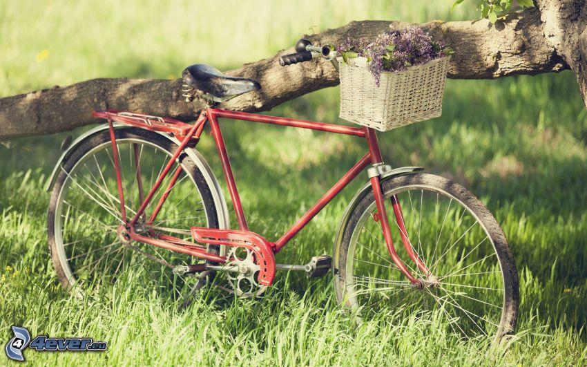 Fahrrad, Ast, Gras