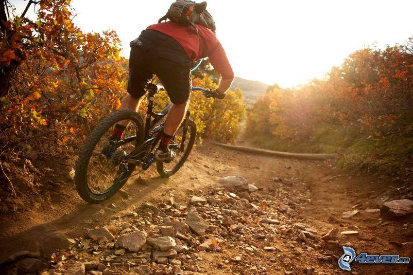 mountainbiking, Radfahrer, Büsche