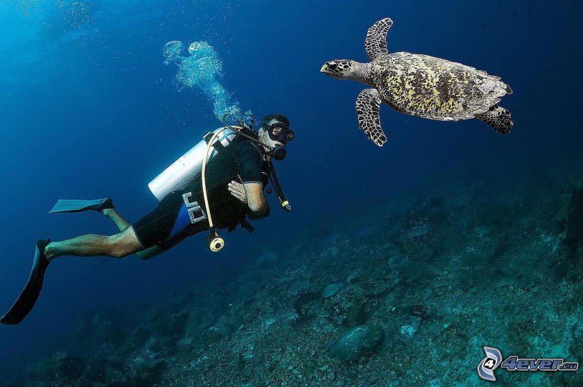 Taucher, Meeresschildkröte