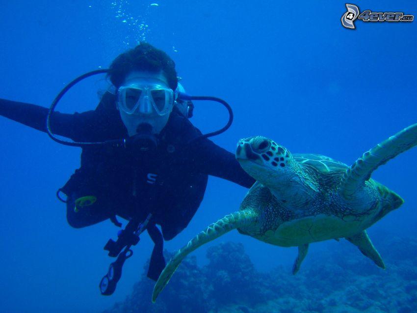 Taucher, Schildkröte