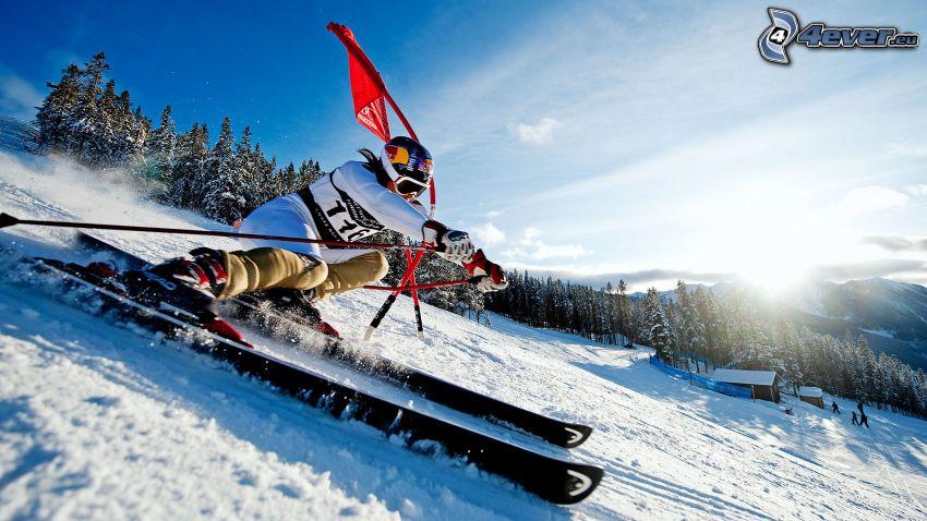 Extrem-Skifahren, Sonne, Wald