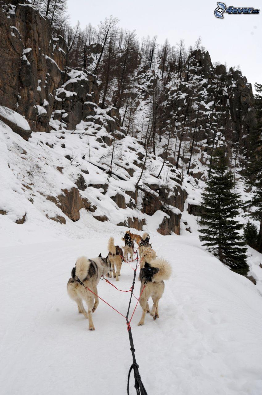 Hundeschlitten, Felsen, Klippe