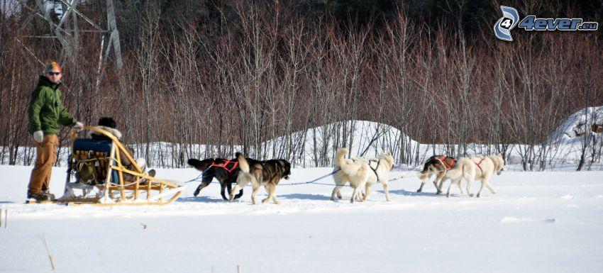 Hundeschlitten, Quebec