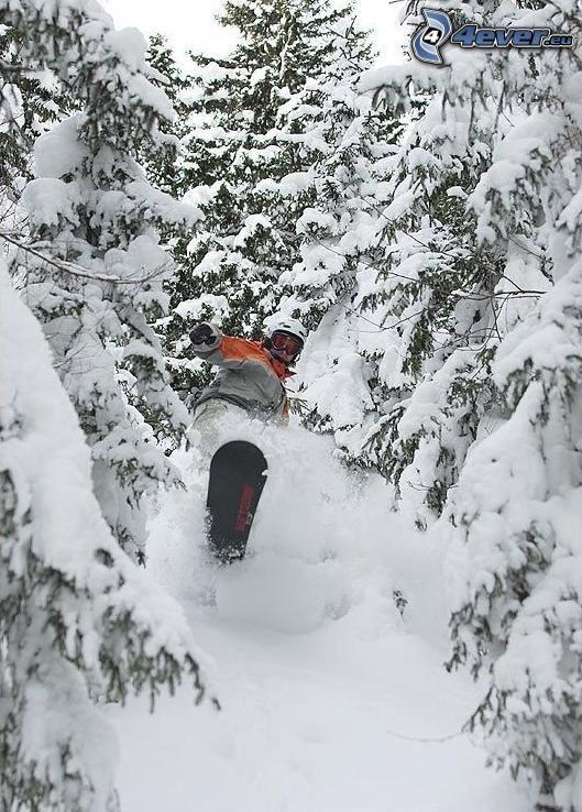Snowboarder, Wald, Schnee, Nadelbäume