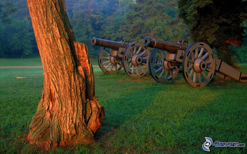 Kanone, Baum