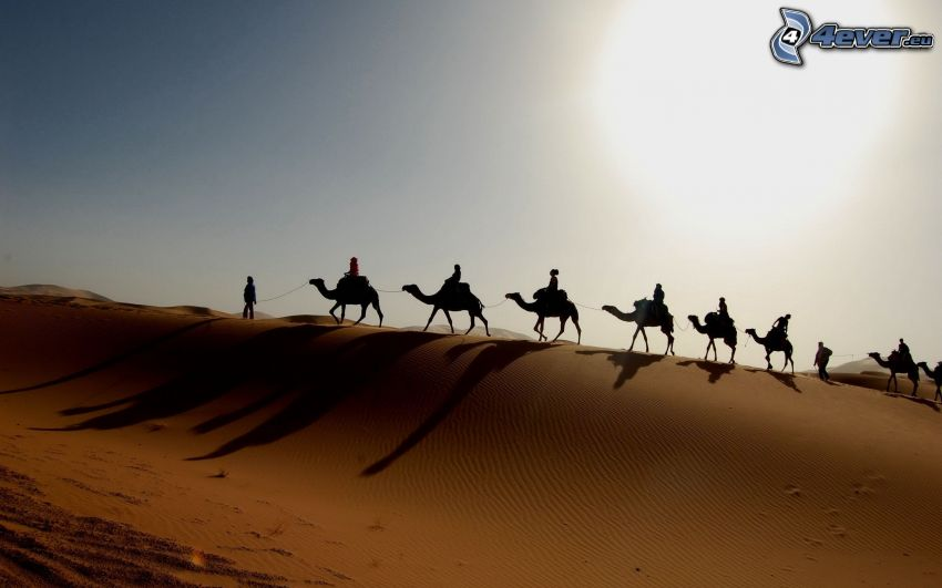 Beduinen auf Kamelen, Kamele, Sand