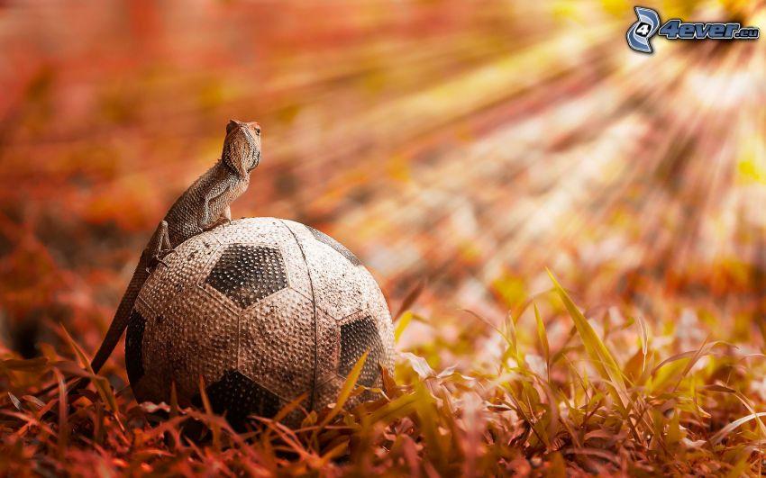 Chamäleon, Fußball