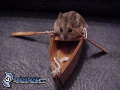 Hamster, Boot, Rudern