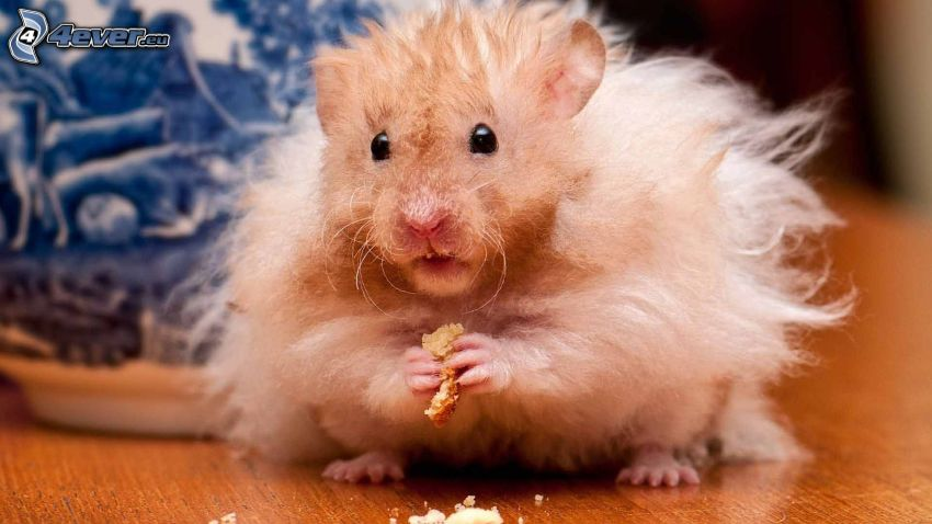 Hamster, Nahrung