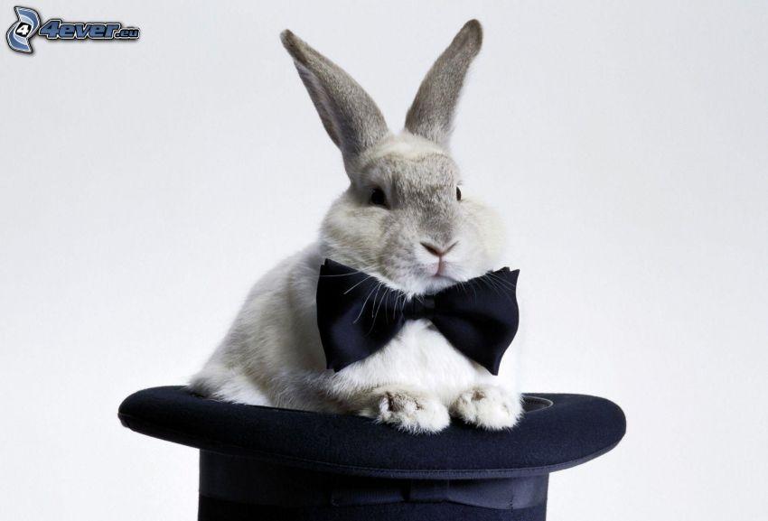 Kaninchen, Hut, Querbinder