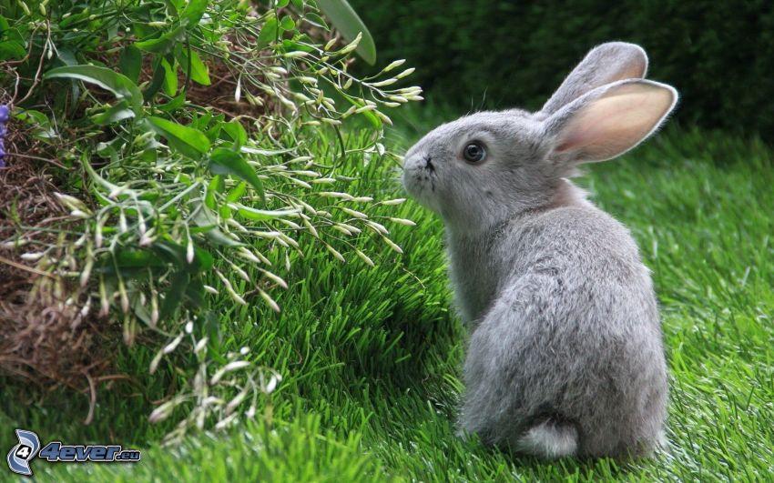 Kaninchen auf dem Gras, Busch