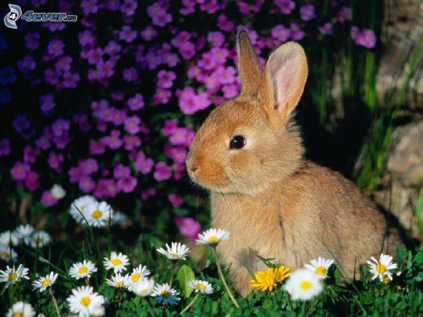 Kaninchen auf dem Gras, Gänseblümchen
