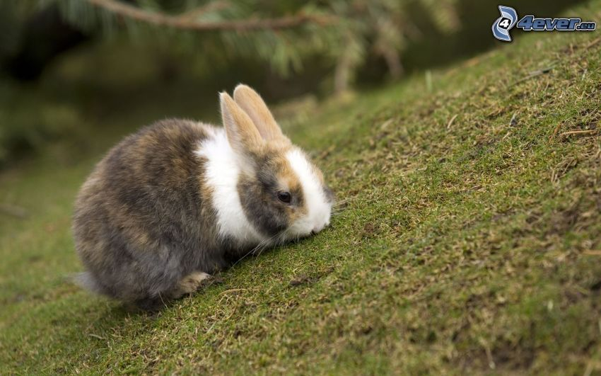 Kaninchen auf dem Gras