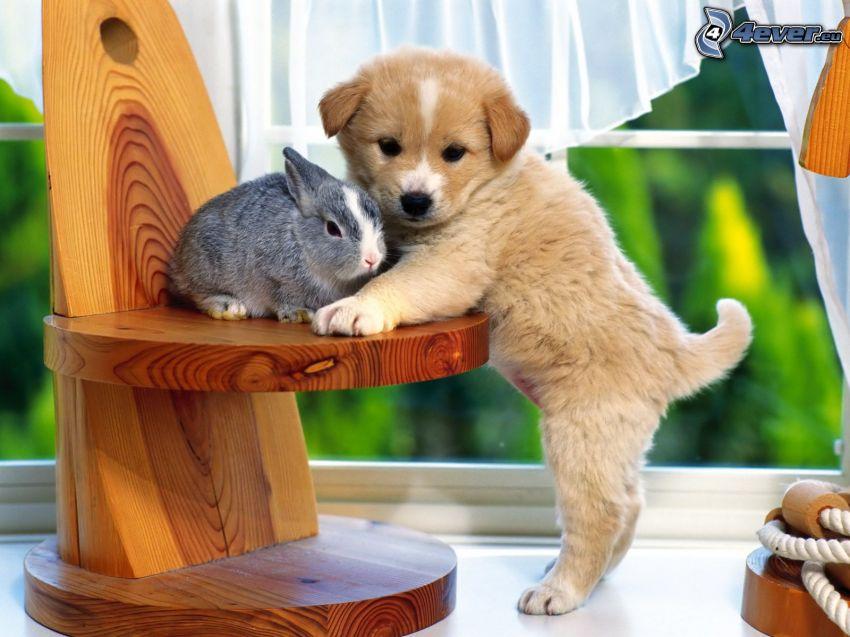 Hund und Kaninchen, Welpe, Stuhl