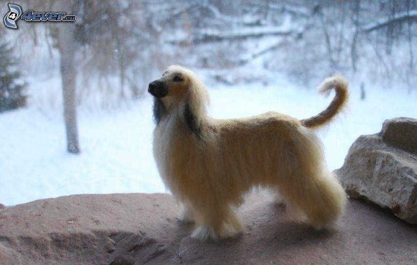 afghanischer Windhund, Schnee