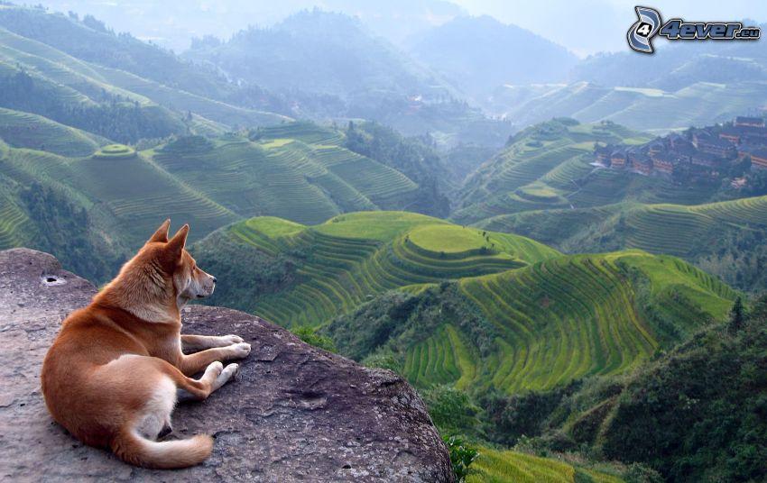 Aussicht auf die Landschaft, brauner Hund, Aussicht von Felsen