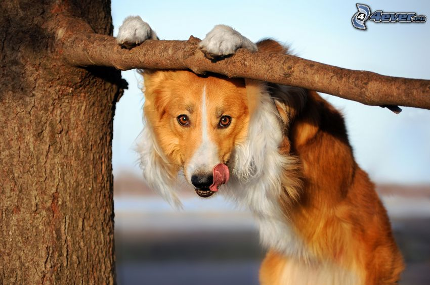 brauner Hund, Ast