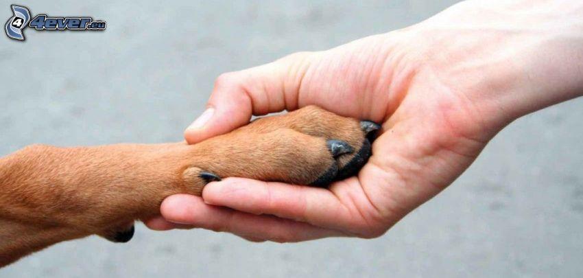 Freundschaft, Pfote, Hand