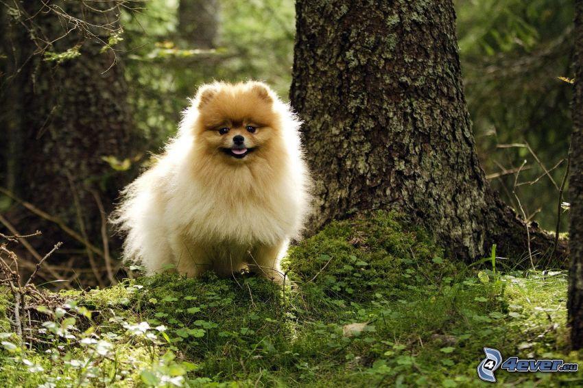 Hund, Wald, Moos