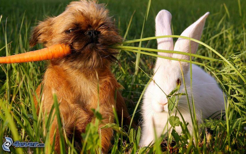 Hund und Kaninchen, Karotte, grünes Gras