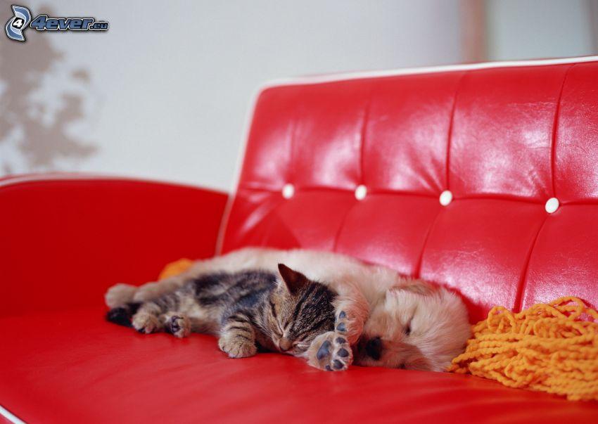 Hund und Katze, schlafender Welpe, Schlafendes Kätzchen, Couch