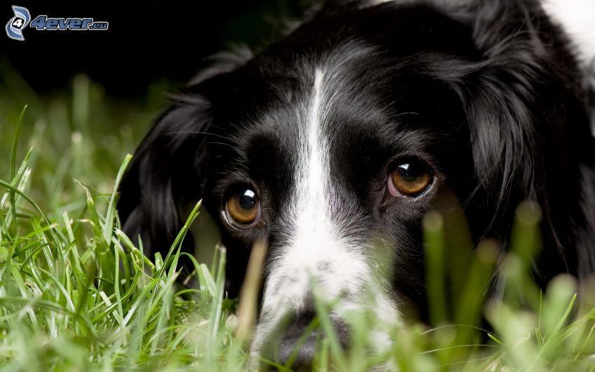 Hundeblick, Hund im Gras