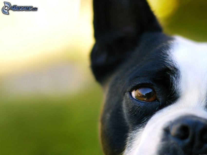 Hundeblick, Schnauze