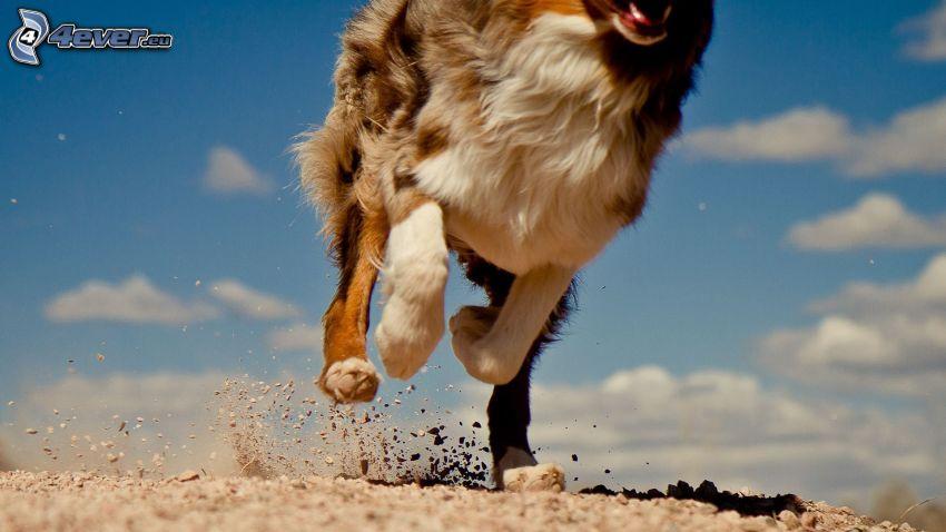 Laufen, Hund