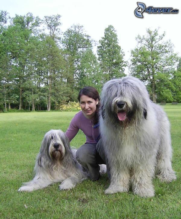 Südrussischer Owtscharka, riesiger Hund