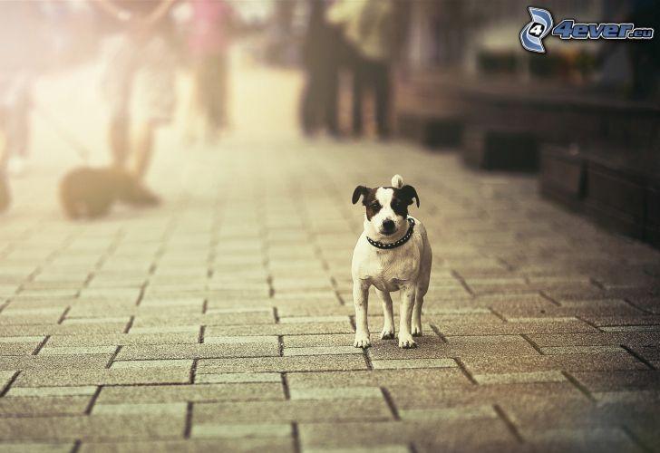 Weißer Hund, Bürgersteig