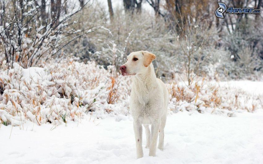 Weißer Hund, verschneiter Wald
