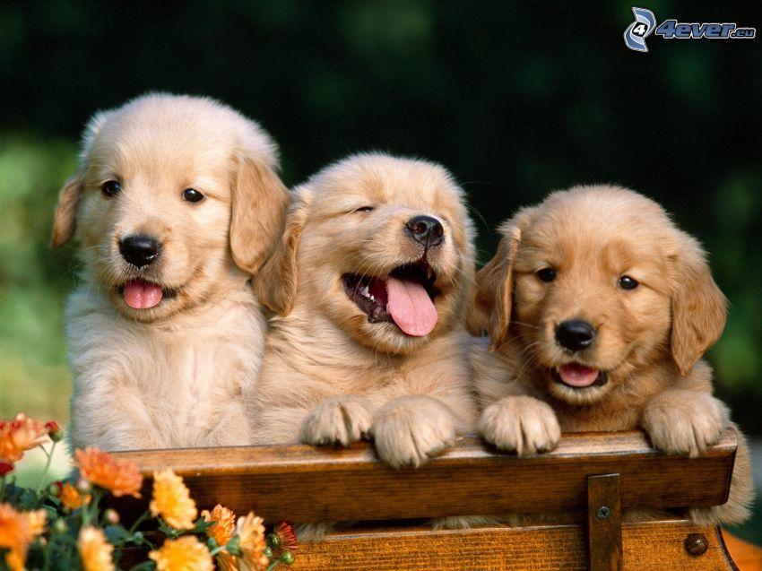 Welpen, Hund auf der Bank, Blumen