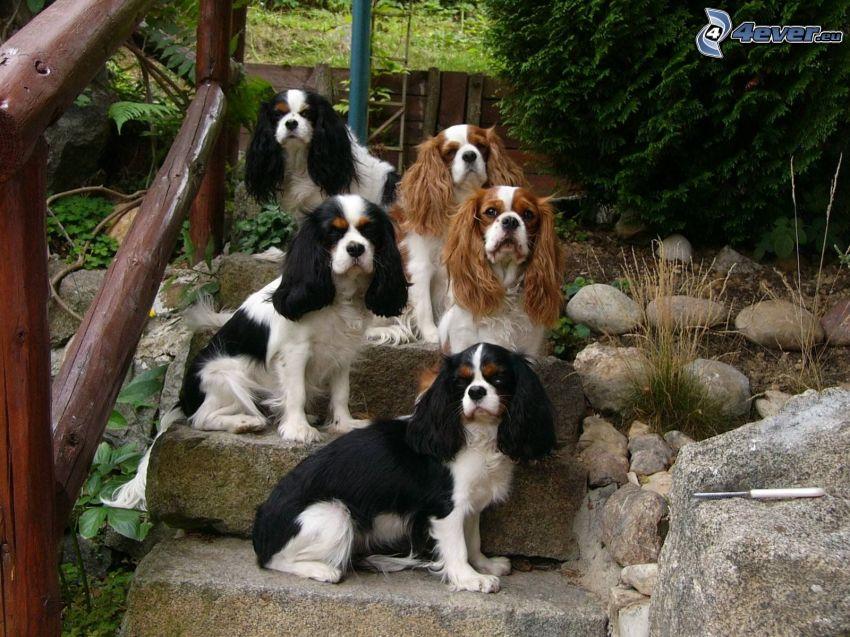 Welpen, Hund auf der Treppe