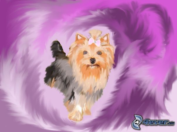 Yorkshire Terrier, Bild, Malerei