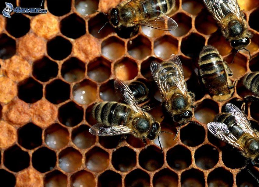 Bienen, Bienenstock