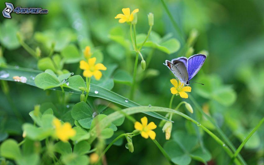 blauer Schmetterling, gelbe Blumen