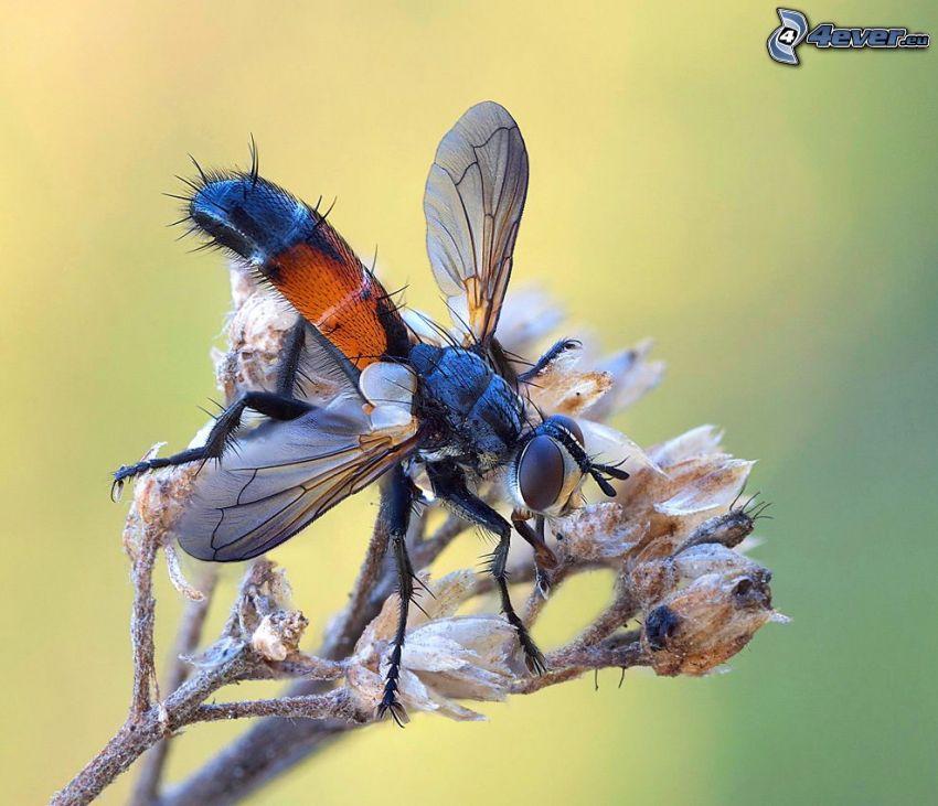 Fliege, Blume, Makro