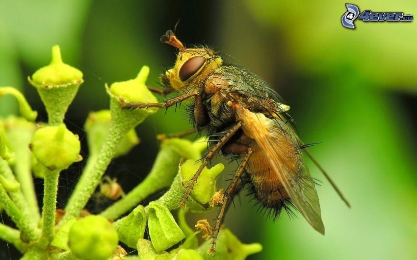 Fliege, Blume