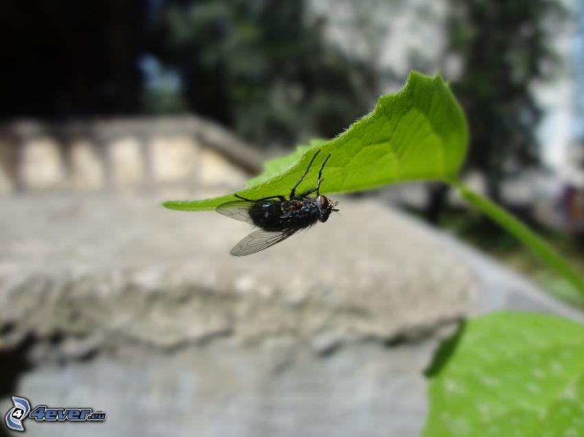 Fliege, grünes Blatt, Makro