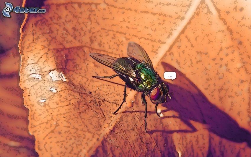 Fliege, trockenes Blatt