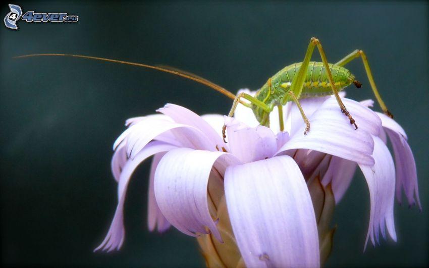 Insekten, Blume