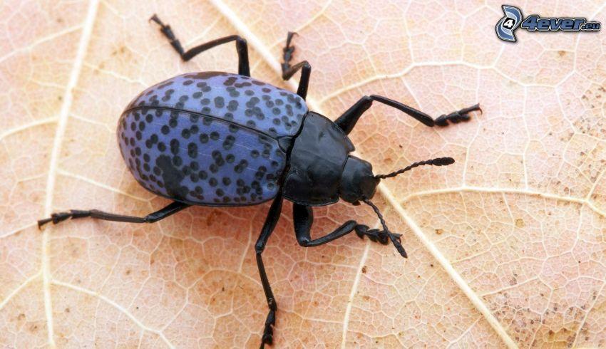 Käfer, Blatt