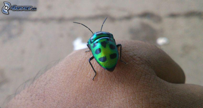 Käfer, Hand