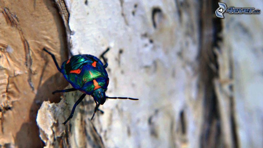 Käfer, Makro