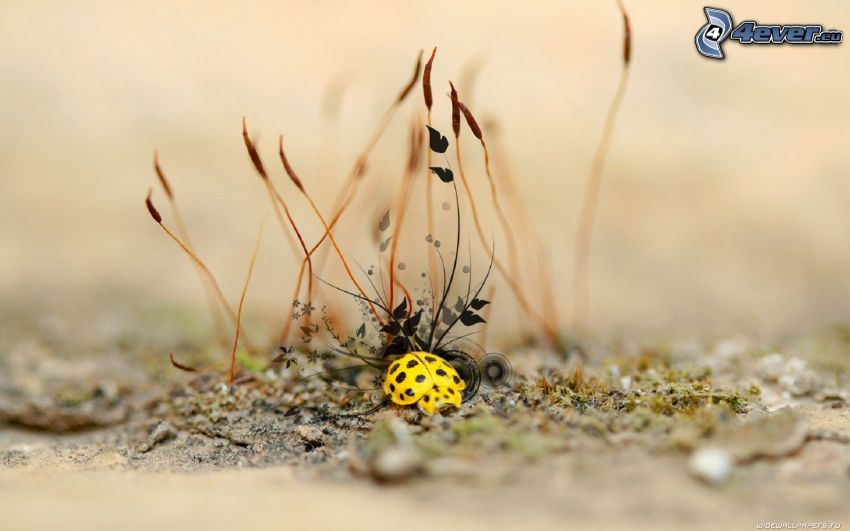 Käfer, Pflanzen