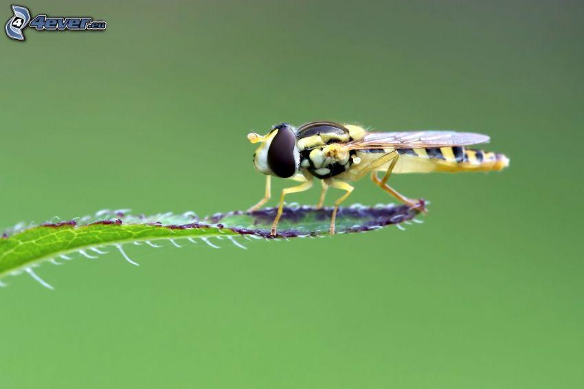 Libelle, Blatt